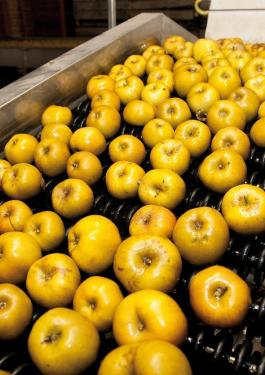 apples in a factory