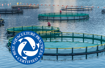bureau veritas BAP sea food certification