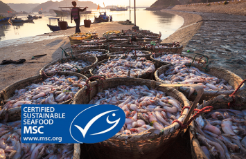 bureau veritas MSC ASC COC sea food certification